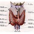 甲状腺结节手术